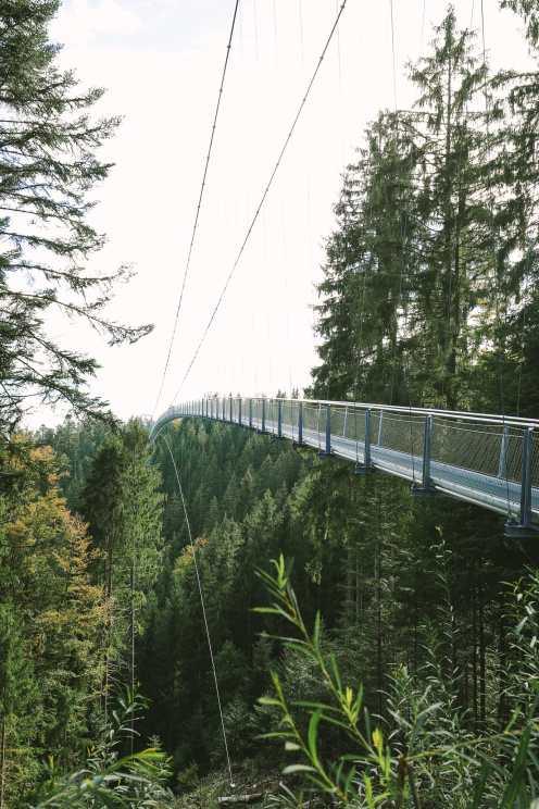 The Black Forest of Germany - Schwarzwald, Baden-Württemberg
