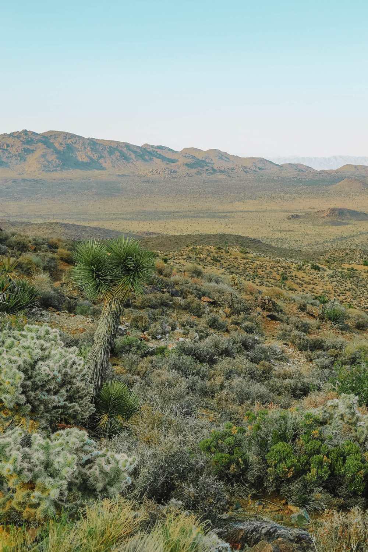 Key View In Joshua Tree National Park
