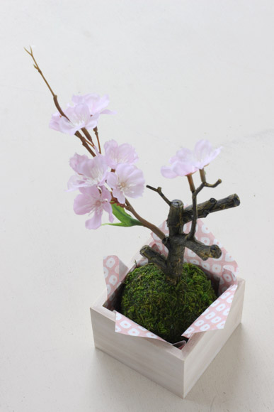 sakura-bonsai-1