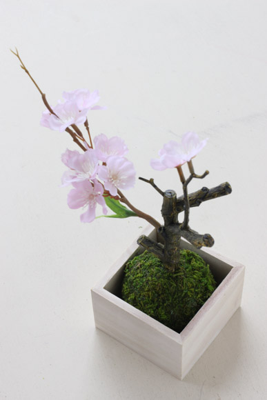 sakura-bonsai-7