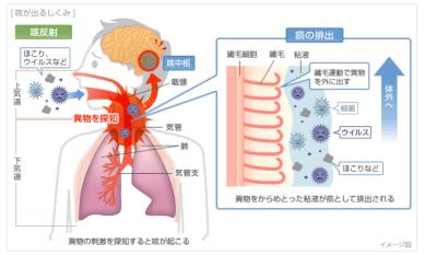 咳が出る仕組み