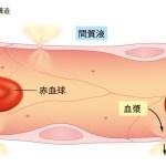 【情報まとめ】毛細血管の血流アップでアンチエイジング!簡単に出来る3つの方法