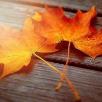 Сушка осенних листьев для аппликаций и подготовка к работе