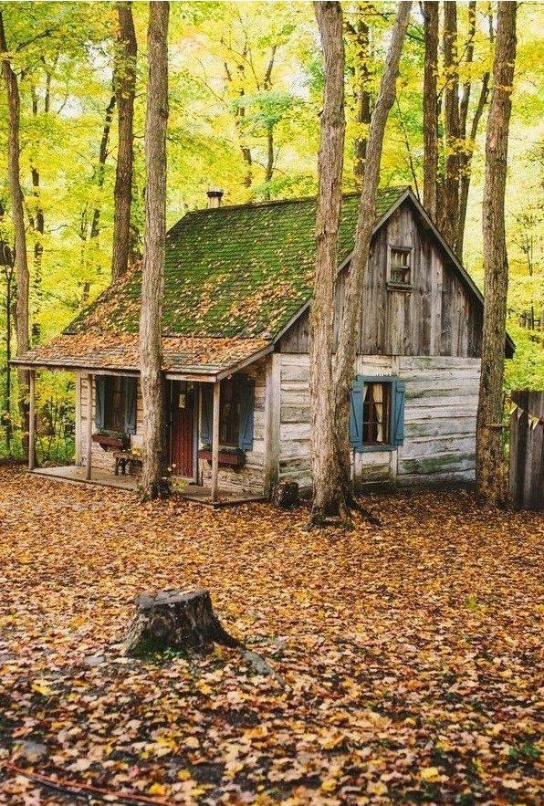 Trees And Log Cabins Handmade Houses With Noah Bradley