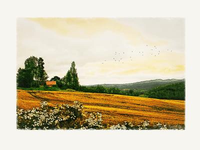 Gyllent landskap 2048x1536(4)