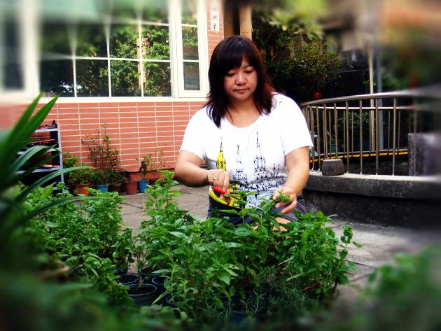 Vicky在自家院子裡栽植各式香草植物作食材。