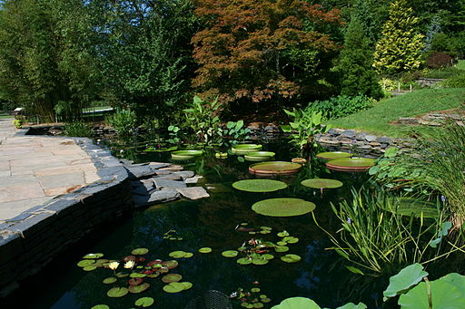 The Lily Pond at Duke Gardens in Raleigh, NC