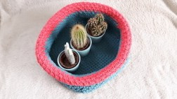 basket filled with cactus as an example