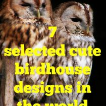 cute birdhouse designs