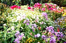 my-garden