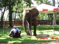Yes.... they had an elephant....
