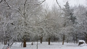 snowy back pasture