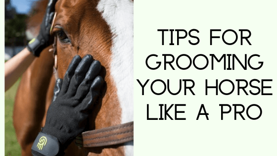 tips for grooming your horse like a pro
