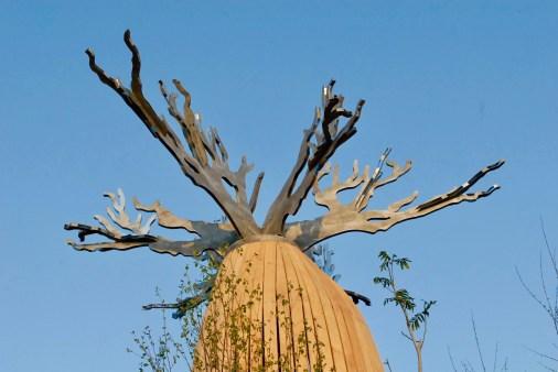 Baobab branches