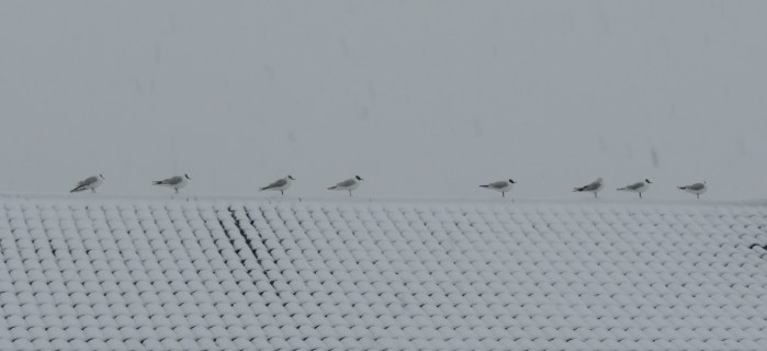 Birds on a pitched roof