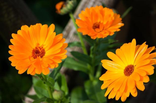 herbst flowers