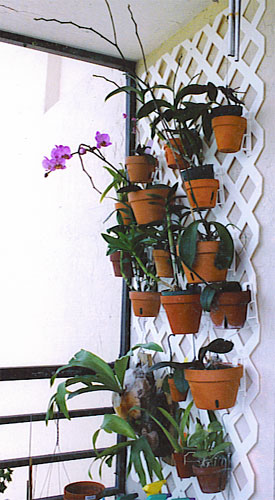 Growing Flowers Pots