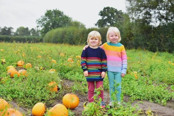 pumpkin picking in Surrey at Garson's Farm