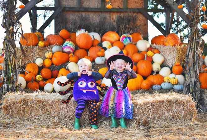 pumpkin picking in Surrey at Crockford Bridge Farm