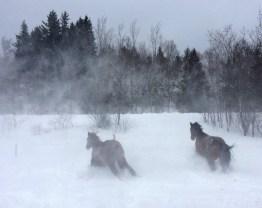 snow-play-5