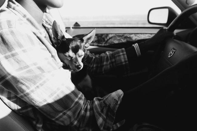 Driver's Companion
