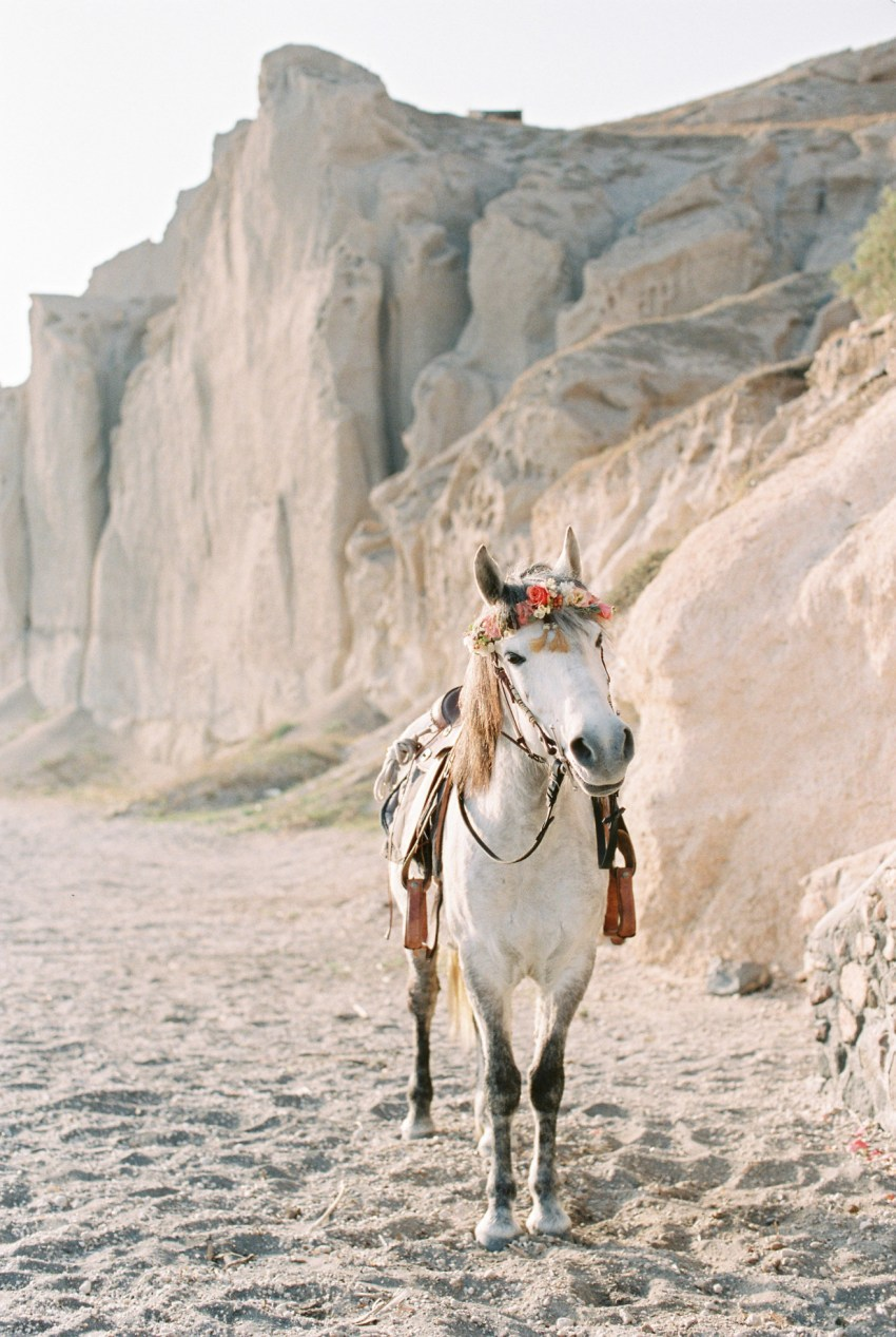 Beautiful Santorini horse wearing wedding crown made of flowers for a beach elopement session.