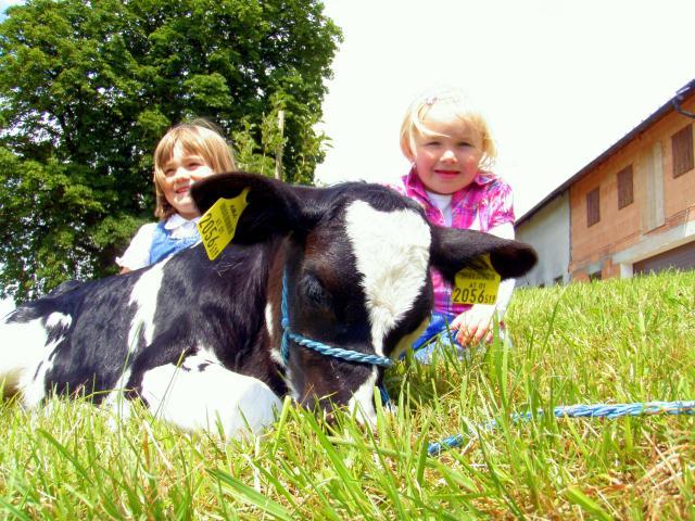 Rinderschau-Holstein-2011-2