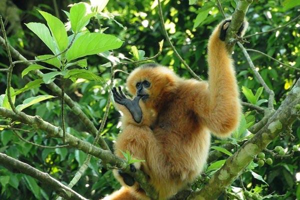 Cuc Phuong National Park (11)
