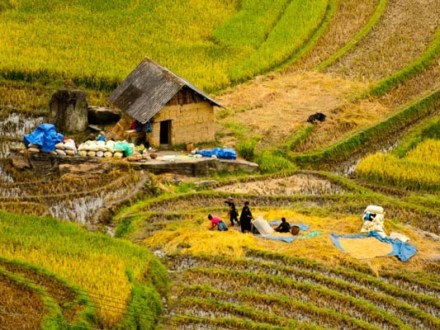 Hanoi Tour Sapa Halong Bay 6 Days
