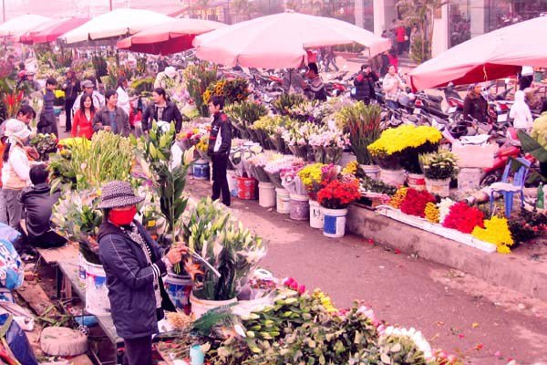 travel hanoi nghi tam flower market