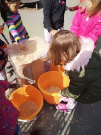 Sawdust for the outdoor toilet - getting buckets ready.