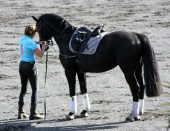 Lunging lesson with Jutta in April, 2014.