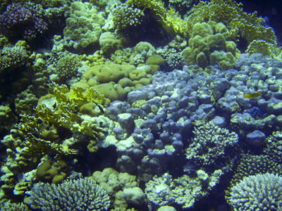 Egypte 2007 Snorkelen-12