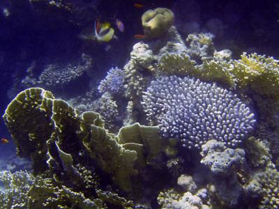 Egypte 2007 Snorkelen-15