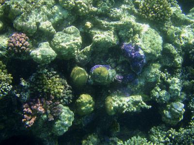 Egypte 2007 Snorkelen-22