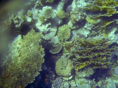 Egypte 2007 Snorkelen-7