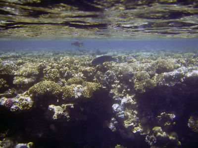 Egypte 2007 Snorkelen-8