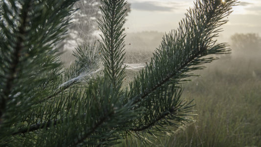 Natuurmonumenten Bij Ossendrecht 2014-11