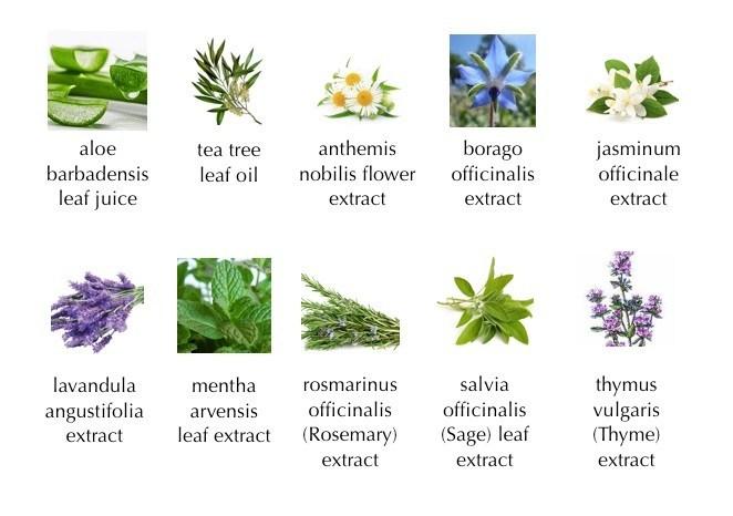 10 jenis plant extract