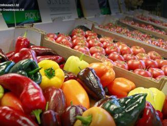 Suntech Greenhouses - Food