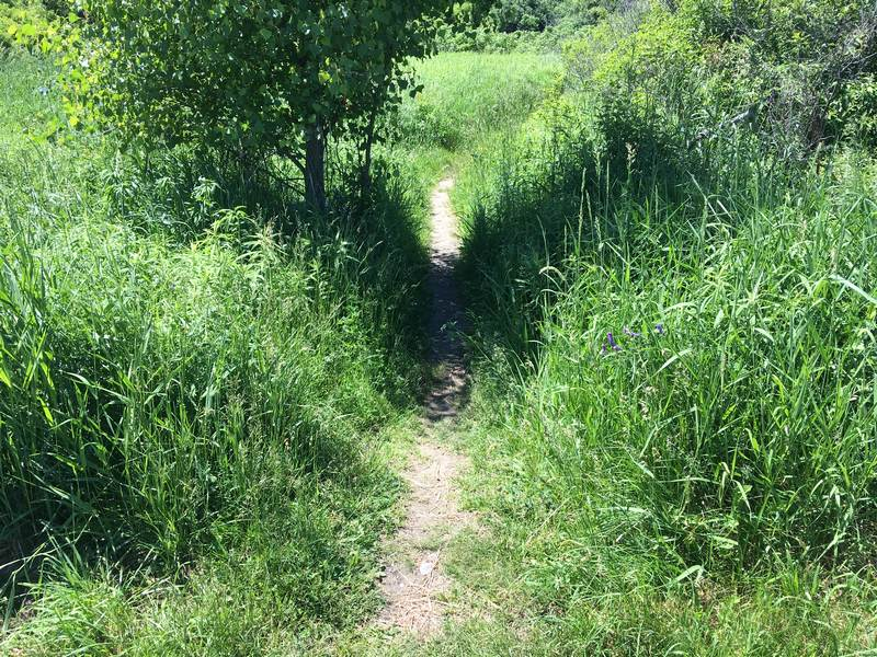 Leaving the K&P Trail: I knew it was going to be a walking trail, but had not expected it to be so narrow.