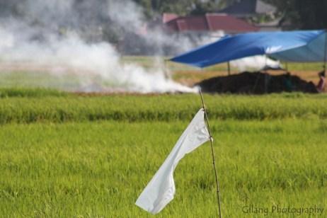 bendera putih, asap, dan sawah