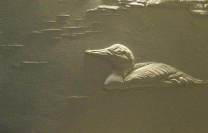 הברווזון המפואר