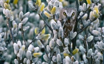 Art Wolfe - Meisterhaft getarnt – Von der Kunst, nicht gesehen zu werden