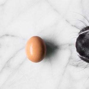 Arlo-and-Egg-IG