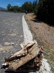 Sardinijske ceste su pune kostiju i mrtvih leptira, al zato mirisu po jasminu