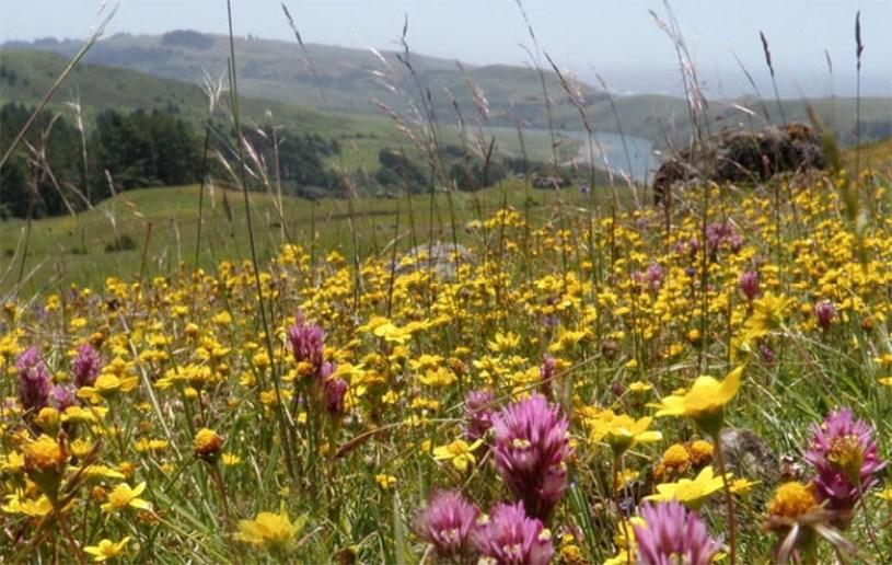 Wildflower walks in Sonoma County