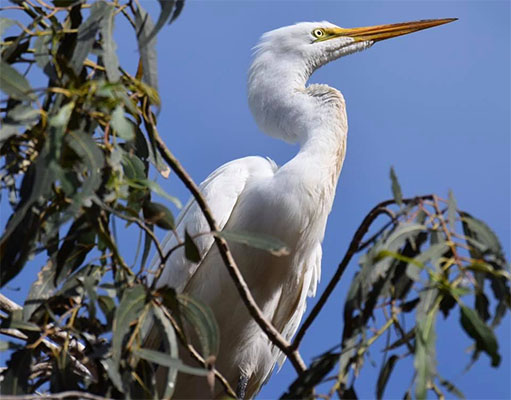Egret photo by Deb Hartnett