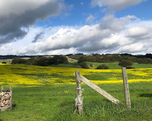 Landscape photo by Ilene Shupnick Eastside of Petaluma
