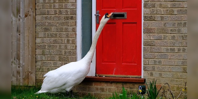 According to SWNS, the bird has been targeting houses on one specific block.